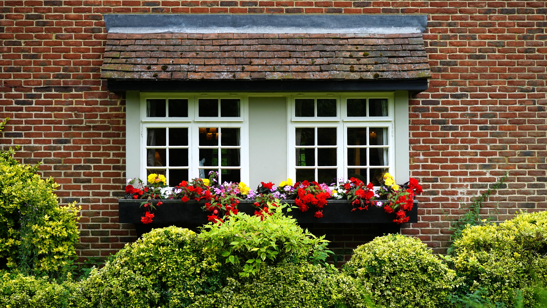 windows-house-bushes-brick